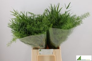 Asparagus green mix